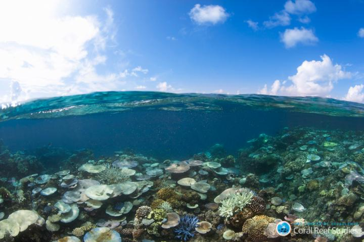Coral Bleaching Threatens the Diversity of Reef Fish (2 of 2)