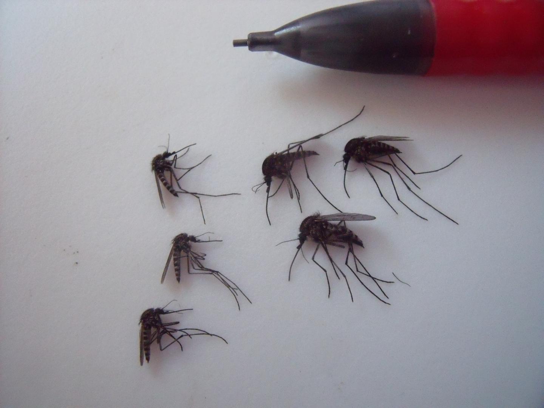 Dartmouth Arctic Mosquito Study (2 of 3)