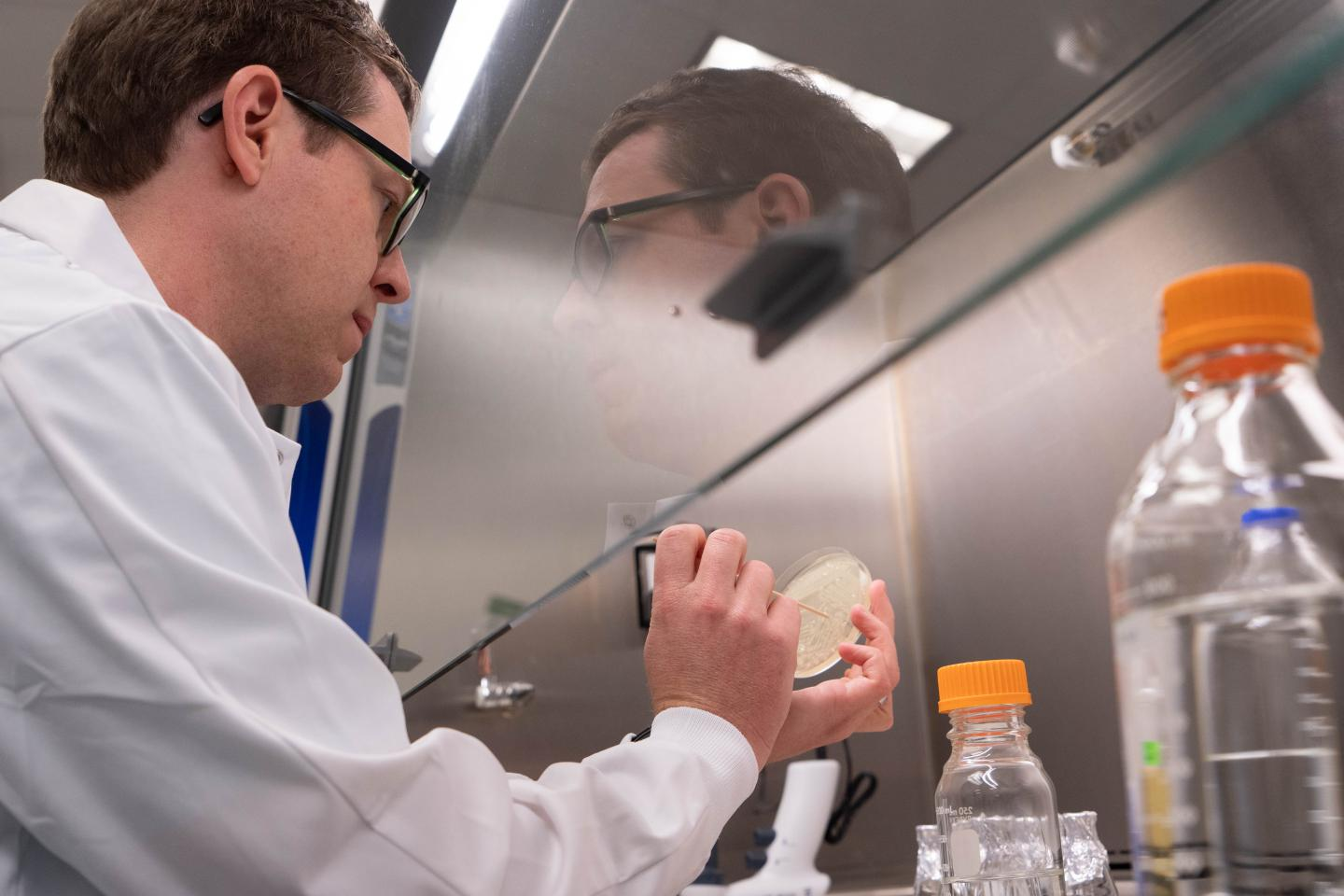 USF Researchers Engineer E. coli Microbes through a First-Of-Its-Kind Synthetic Pathway