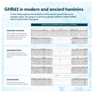 GHRd3 in modern and ancient hominins