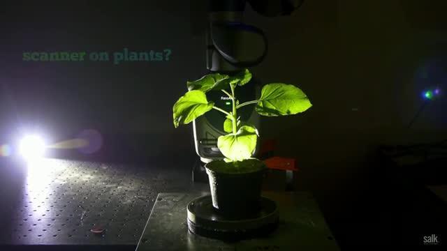 Salk Scientists Use 3-D Laser Scanning on Plants