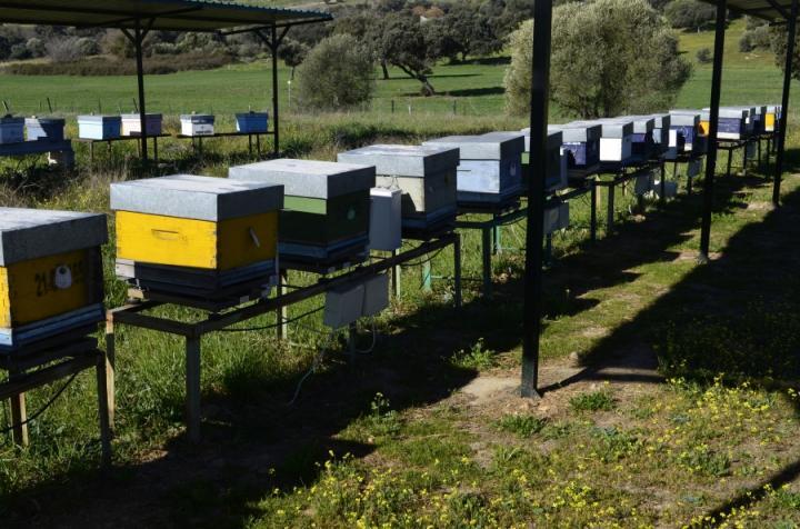 Bees in Cordoba