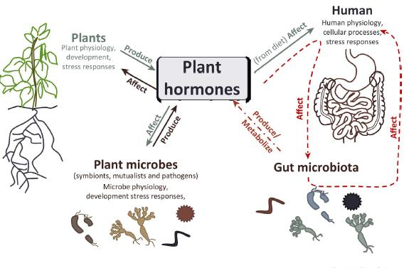 Human-Plant-Microbiome Interactions