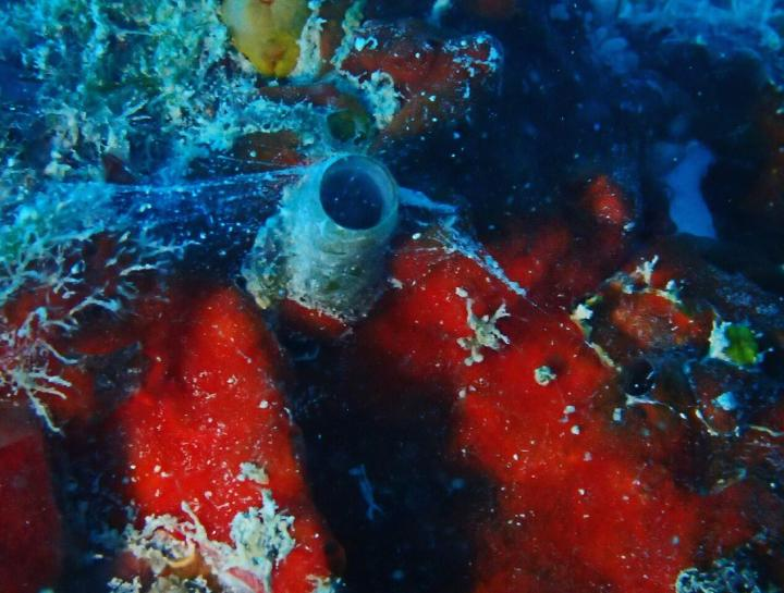 Worm Snail with Mucus Web