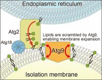 Isolation membrane expansion