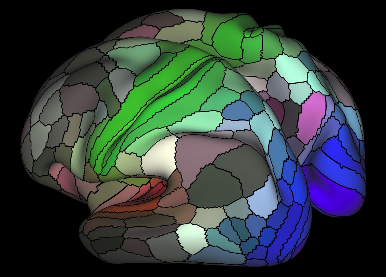 Human Cortex Parcellation
