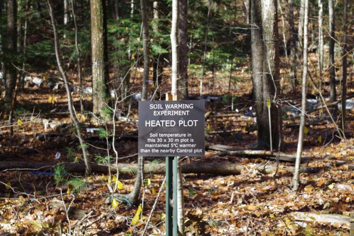 Soil Warming Plot at Harvard Forest in Massachusetts