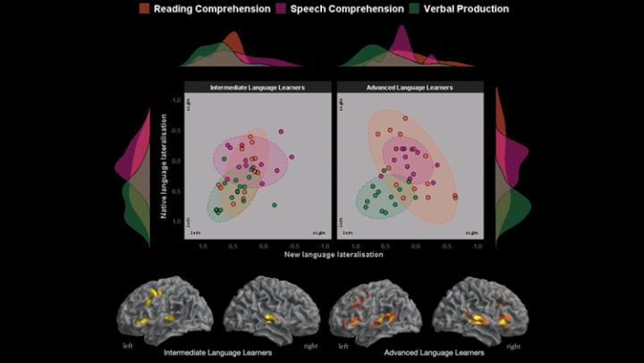 Learning a New Language Changes the Brain's Division of Labor