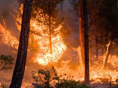 Whitewater-Baldy Complex Wildfire