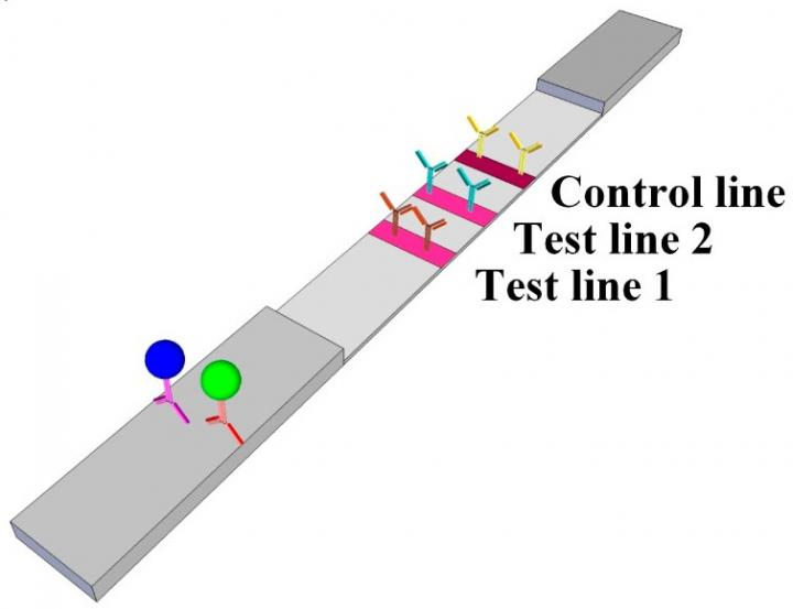 Paper Test Strip Could Help Heart Failure Patients Monitor Their Condition at Home