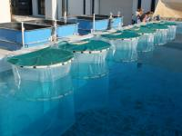 Experiment conducted in Crete Island, Greece