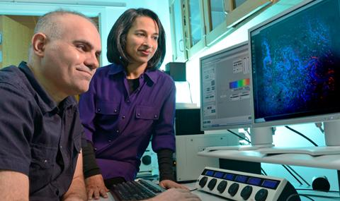 Yucel Akgul and Mala Mahendroo, University of Texas Southwestern Medical Center