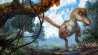 Coelurosaur on Forest Floor