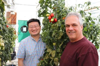 Zhangjun Fei and James Giovannoni, Boyce Thompson Institute