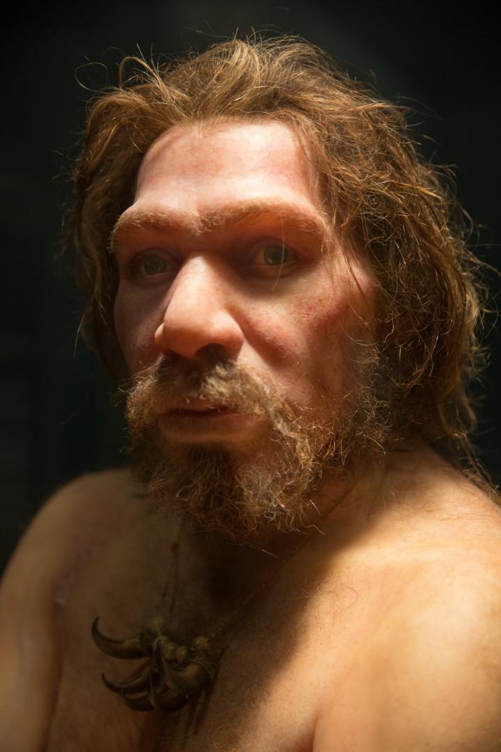 Inbreeding, Population Size/demographics Could Have Led to Neanderthal Extinction