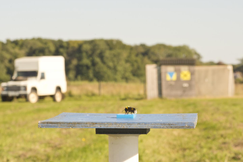 Bee on Feeder Platform