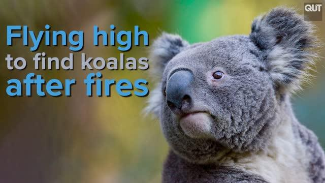 Flying High to Find Koalas