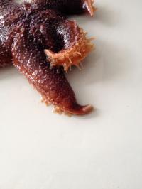 Starfish (1 of 3)