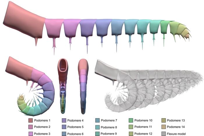 Kinematic models of Anomalocaris canadensis