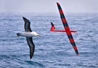 Bird and Glider