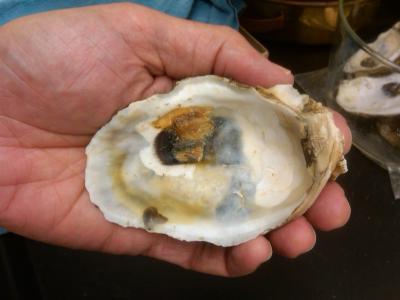 Post-Spill Oyster Shell