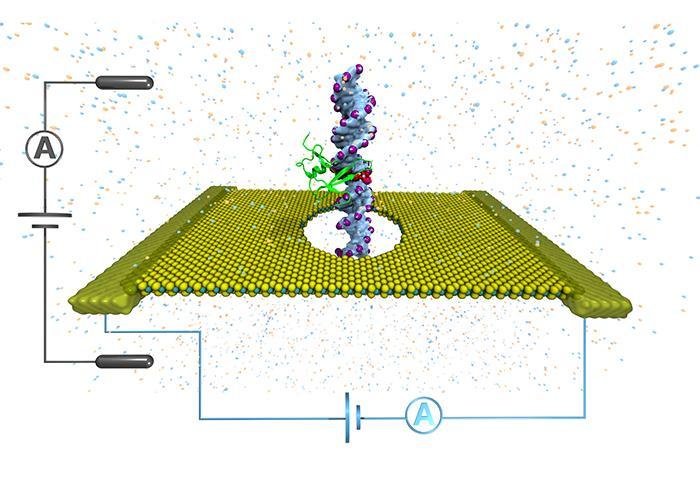 MoS2 Methylation Mapping