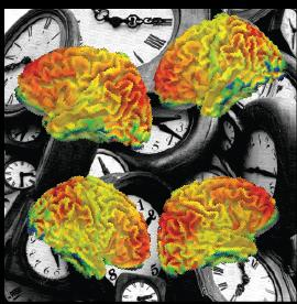 Timing In The Brain
