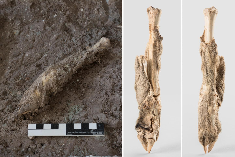 The mummified sheep leg.