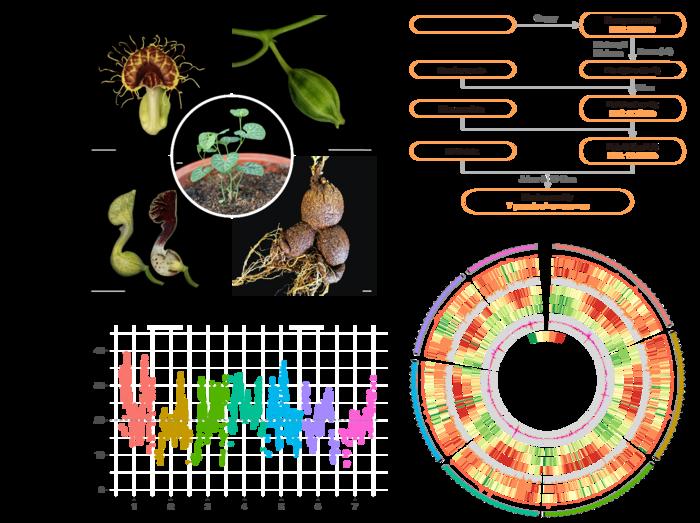 Overview of the <em>A. fimbriata genome</em> assembly and features.