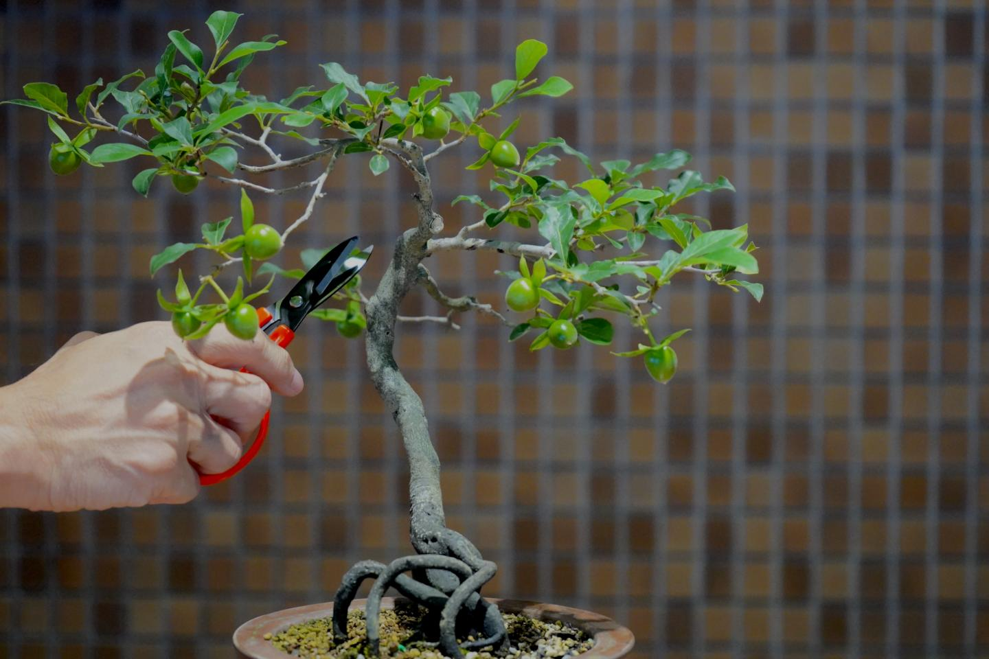 To prune or strengthen this branch