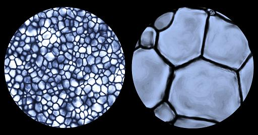 Preserving stem cells and tissue without the freezer burn