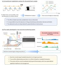 Differences Between Conventional Metabolome Analysis and the Newly Developed in Vivo Real-Time Monit