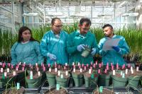 Better Plant Edits by Enhancing DNA Repair (3 of 3)
