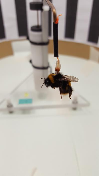 Bee in a flight mill
