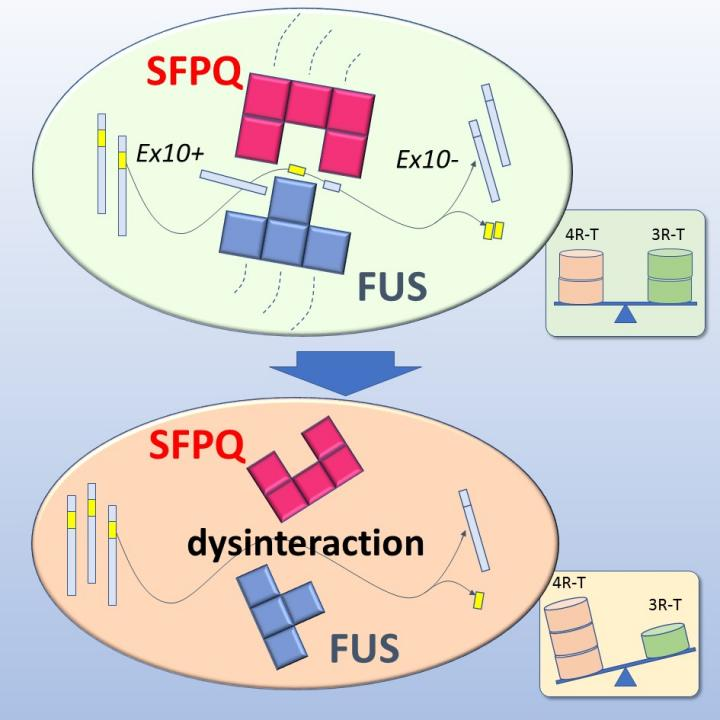 Altered Tau Isoform Ratio Caused by Loss of FUS and SFPQ Function Leads to FTLD-like Phenotypes