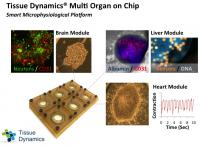 Human on Chip Platform