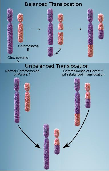 CNIO Chromosomal Translocation