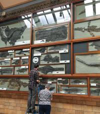 Dean Lomax & Judy Massare Examining Ichthyosaurs at London Natural History Museum