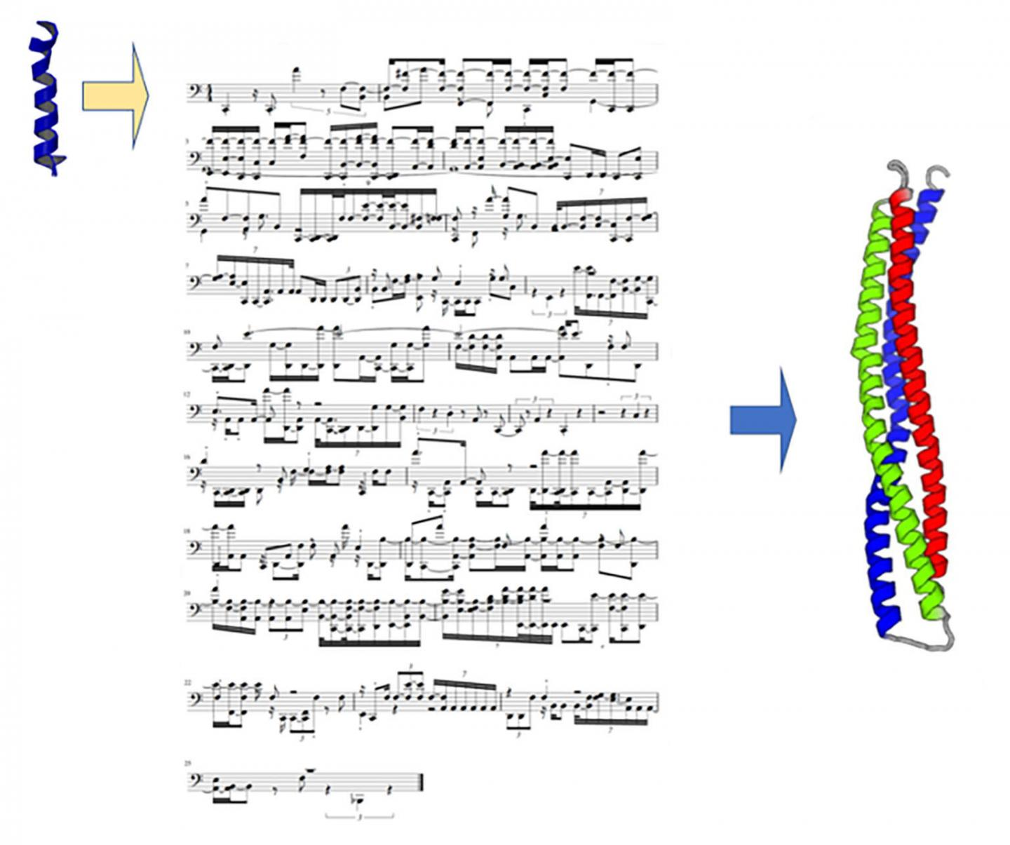 Using Musical Scores to Code the Structure and Folding of Proteins Composed of Amino Acids