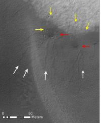 Dendritic Furrows on Martian Dunes