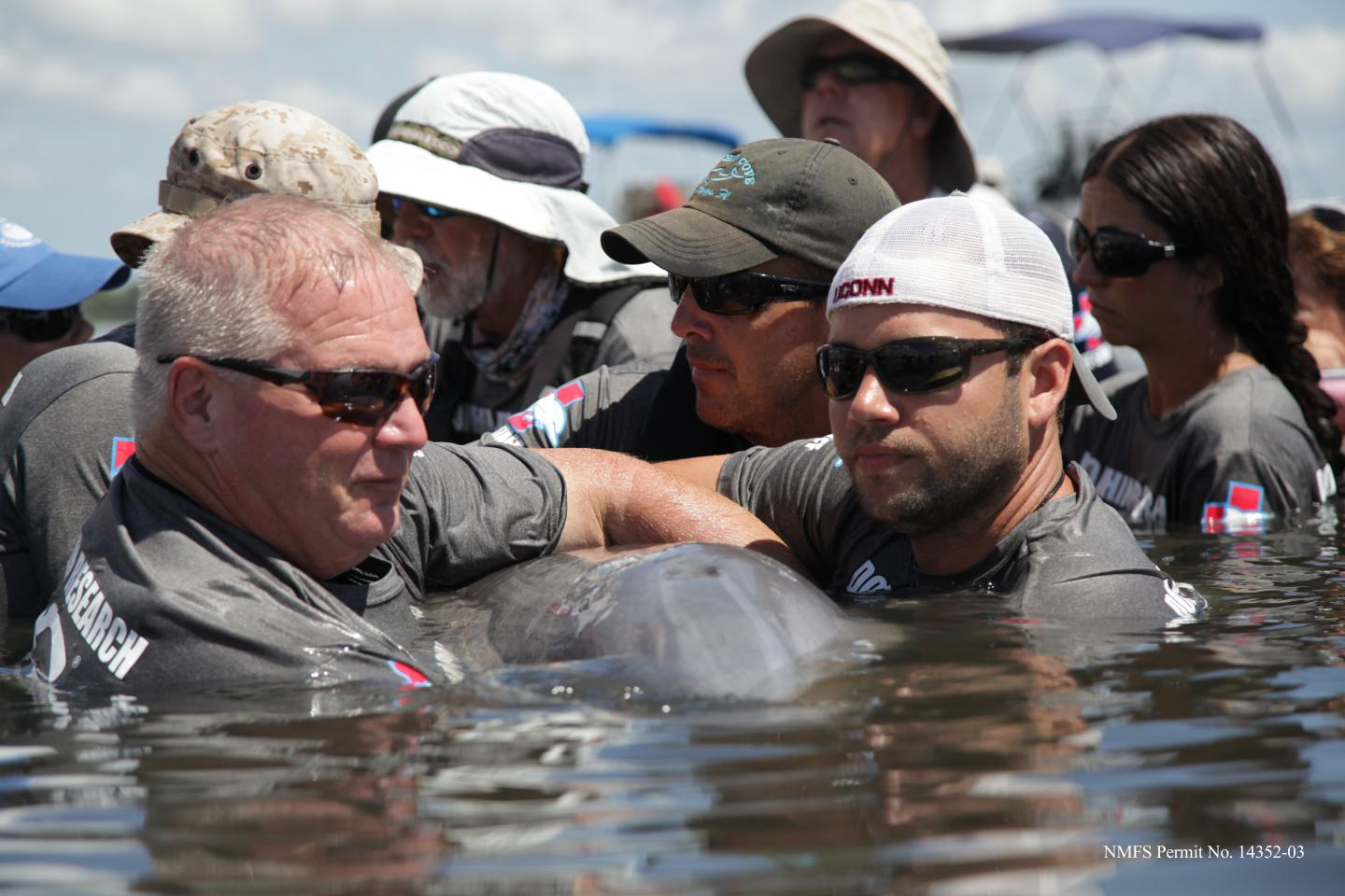 Dolphin Research in Water