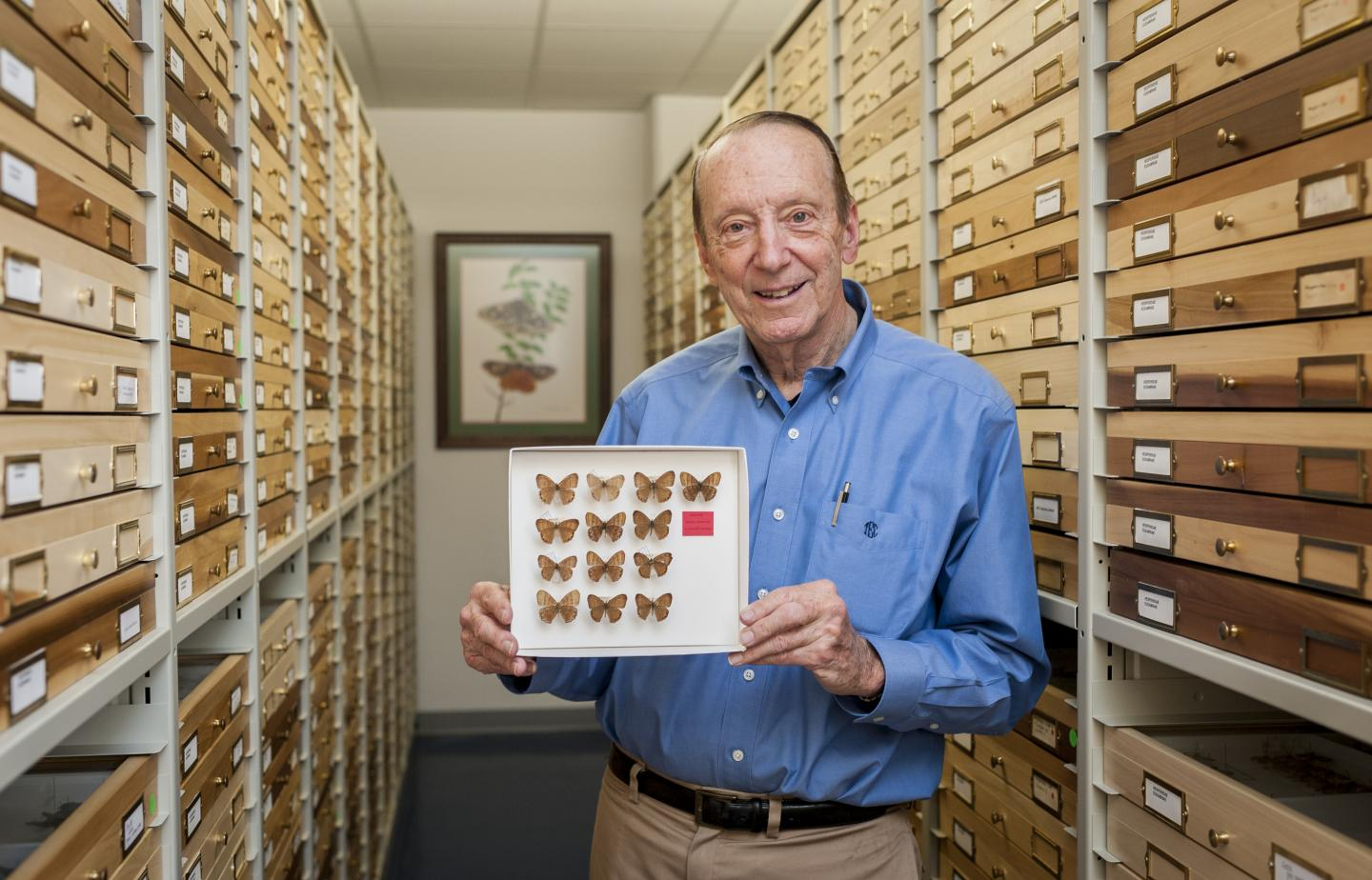 New Butterfly Species Named in Honor of UF Lepidopterist