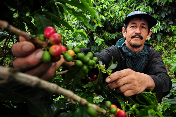 Climate Change a Buzzkill for Coffee Lovers (1 of 2)