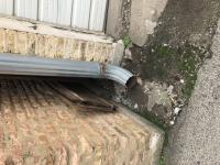 Rats' natural environments