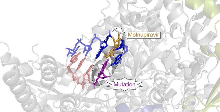 Drug candidate molnupiravir