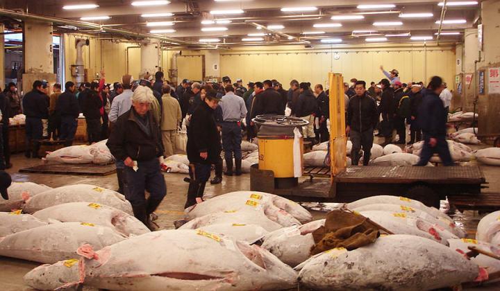 Tuna at the Tsukiji Fish Market in Japan