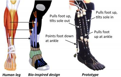 Soft Active Orthotic for Ankle-Foot Rehabilitation