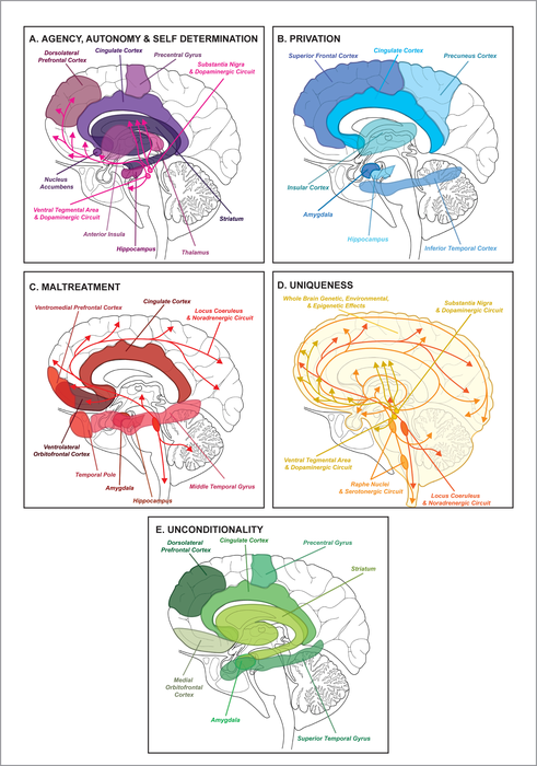 Neural facets of human dignity