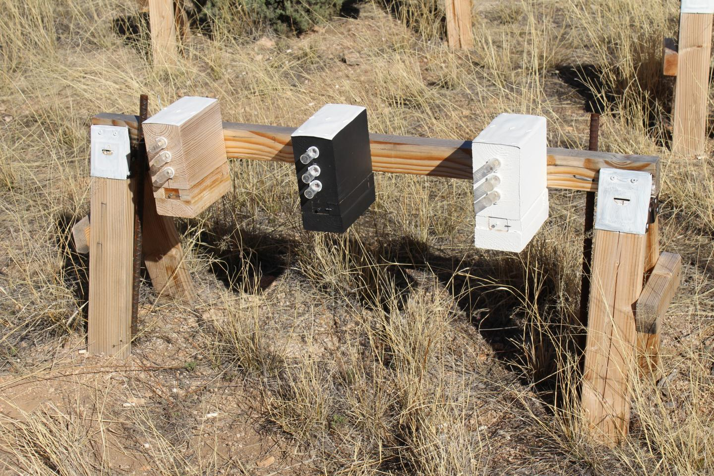 Bee Warming Experiment