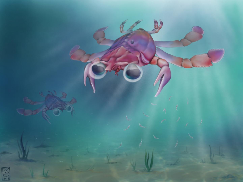 A Swimming Beautiful Chimera